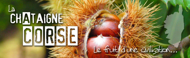 Châtaigne et chataigniers en Corse