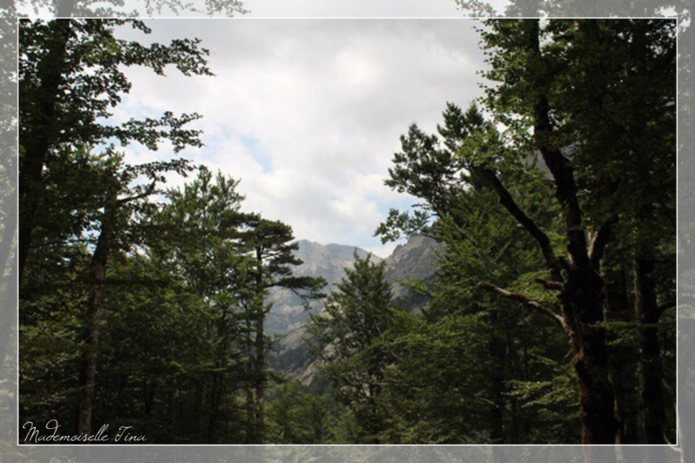 La Cascade des Anglais - A Foce Di Vizzavona