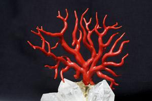 branche naturelle de corail rouge