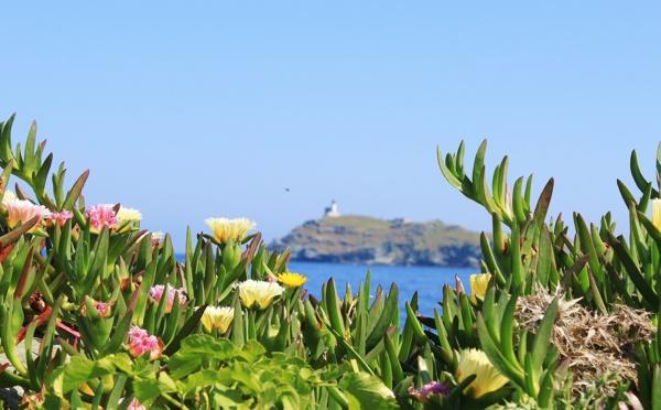 Pourquoi il faut absolument découvrir la Corse au printemps.